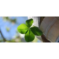18 DẤU HIỆU MAY MẮN CHO BẠN TRONG CUỘC SỐNG